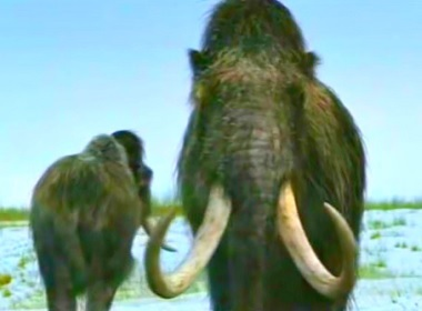 Russian Scientists Will Clone Woolly Mammoth