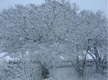 Celebrating New Year In Syzran, Russia
