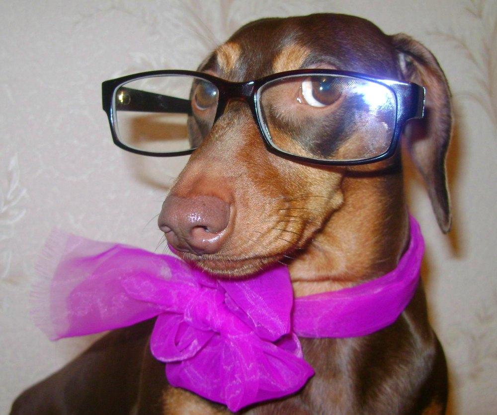 Собака, смешное фото.