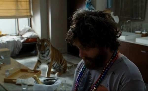 The hangover story