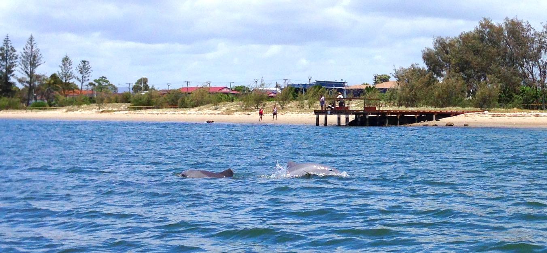 Дельфины в Точке Рая