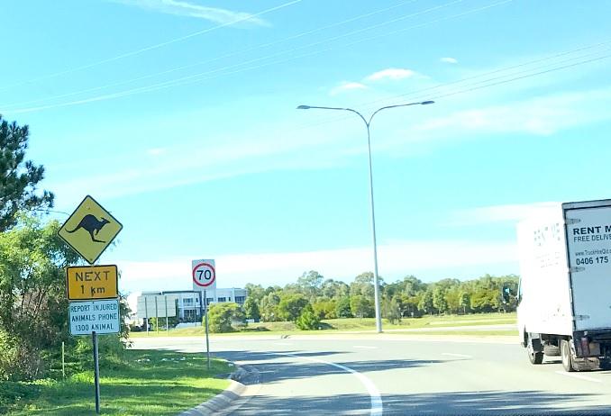 Дорожный знак с кенгуру.