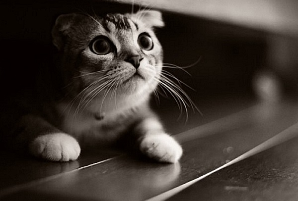 Котенок боится.